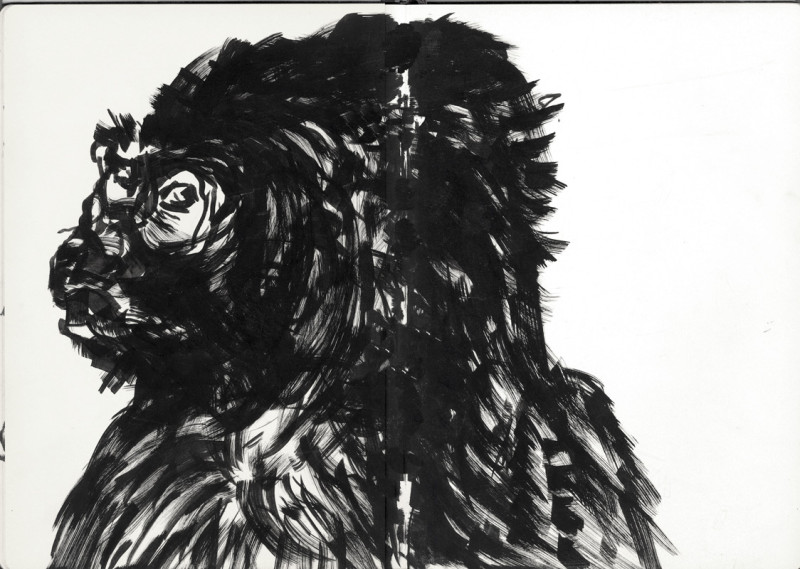 gorilla-dibujo